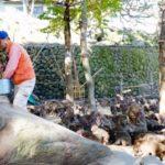 大分県「高崎山自然動物園」は猿だらけ!犬は行くべきでない!
