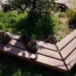 「はなぐり海水浴場」が猫天国だった