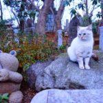 カエル寺で有名な「如意輪寺」で不思議な猫に出会ったよ