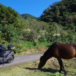「都井岬」世界でも珍しい!野生の馬に急接近できたゾ!