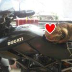 まったくわからなくてもベストなバイクが選べる!女子のためのバイクの選び方を教えるわよ!