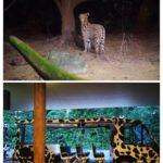 【ジャングルかよ】シンガポール「ナイトサファリ」がジャングル探索すぎる!