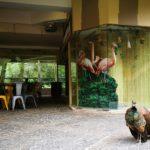 鳥、近っ!「ジュロンバードパーク」は鳥が放し飼いされてる鳥動物園