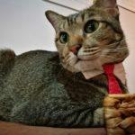 シンガポールの「猫の博物館」は世界最高峰レベルの猫カフェ!成猫から子猫まで遊べる!