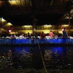 シンガポールで台湾と一味違う真剣エビ釣り!「ハイビン プンゴル」
