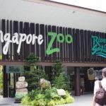 【(多分)底値】バスと地下鉄で行く!シンガポール動物園予約&行き方ガイド