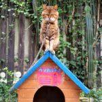 圧倒的、猫!「しろとり動物園」はネコ科が充実しているふれあい動物園だ!