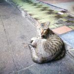タイで出会った猫達