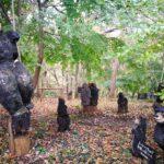 「クマの森ミュージアム」森の中でたくさんの冬眠しない熊に囲まれる!