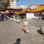中国青島で有名な偽物市場とヒトデを食べる