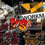 【ワークマン】絶対に服に毛を植える猫VS毛が付きにくい制電ウェア